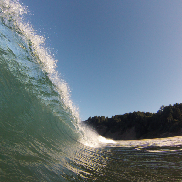 Left Coast Curl