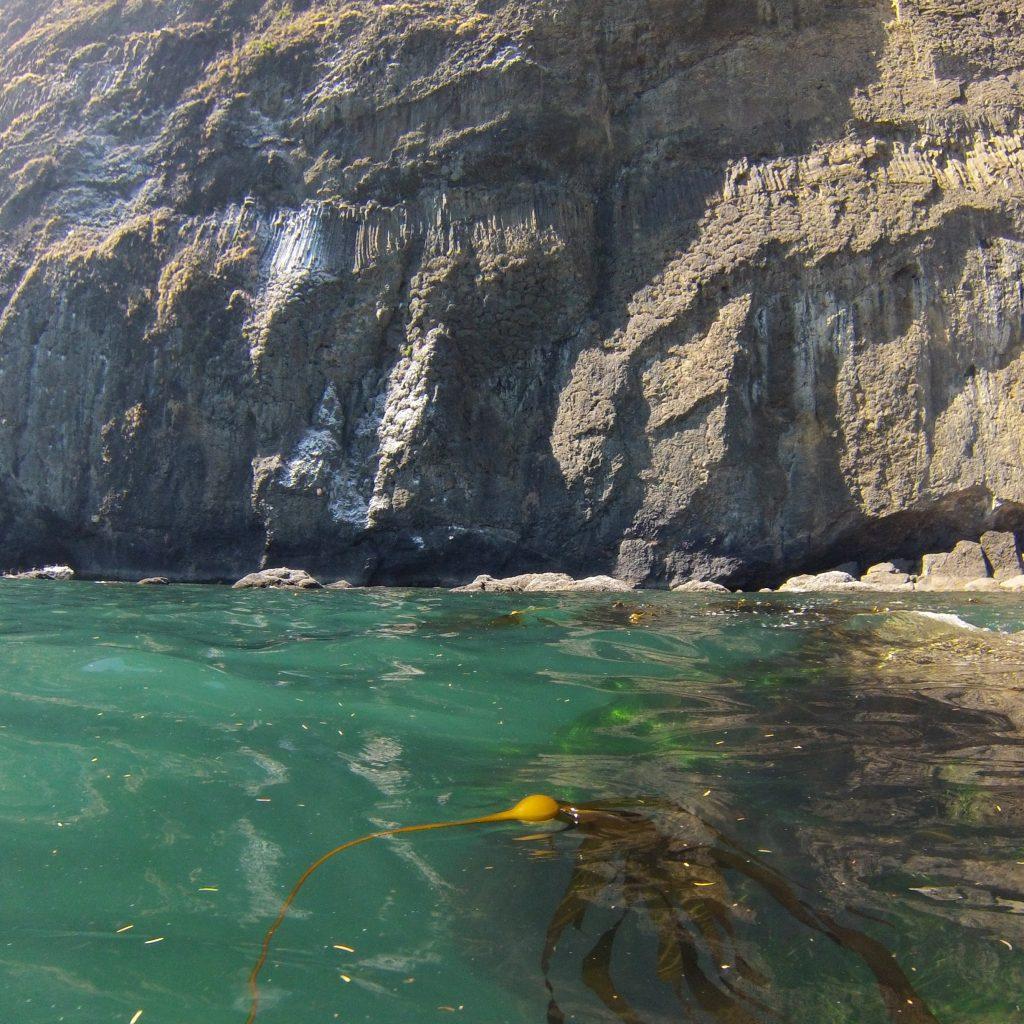 Img 0108 safaritownsurf for Deep sea fishing oregon coast